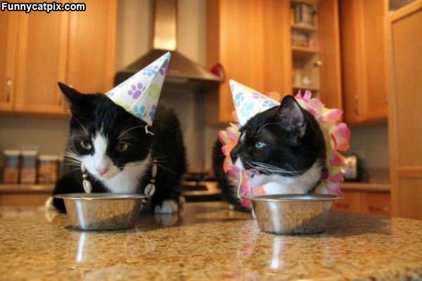 2 Cat Hats