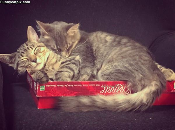2 Cats In A Box