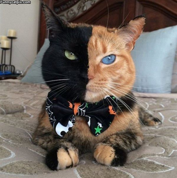 2 Faced Kitty