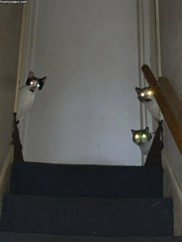 3 Cats Watching