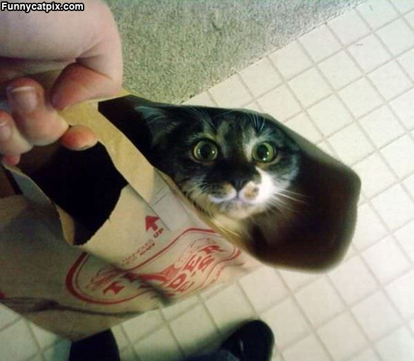 A Bag Of Cat