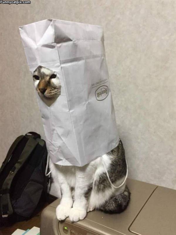 A Bag Of Cat