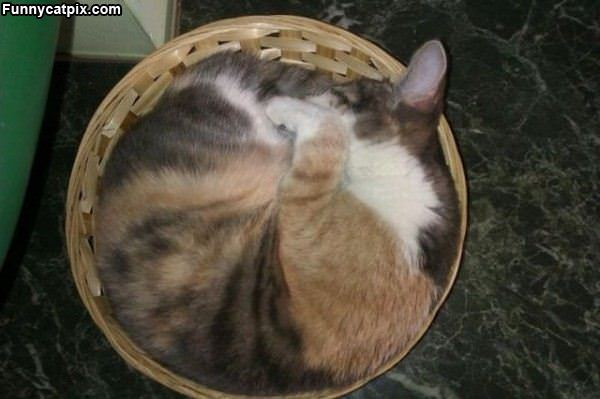 A Basket Of Cat