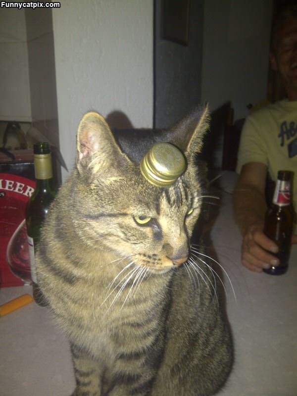 A Bottle Cap