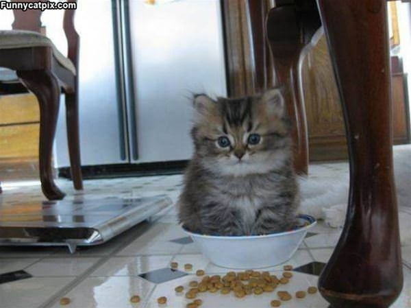 A Bowl Full Of Kitty