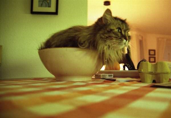 A Bowl Of Cat