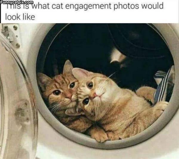 A Cat Engagement Photo