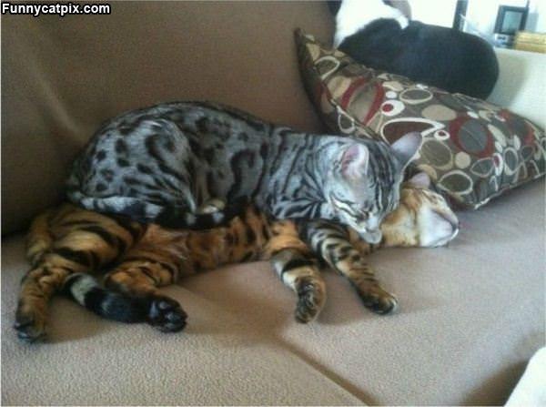 A Cat Nap