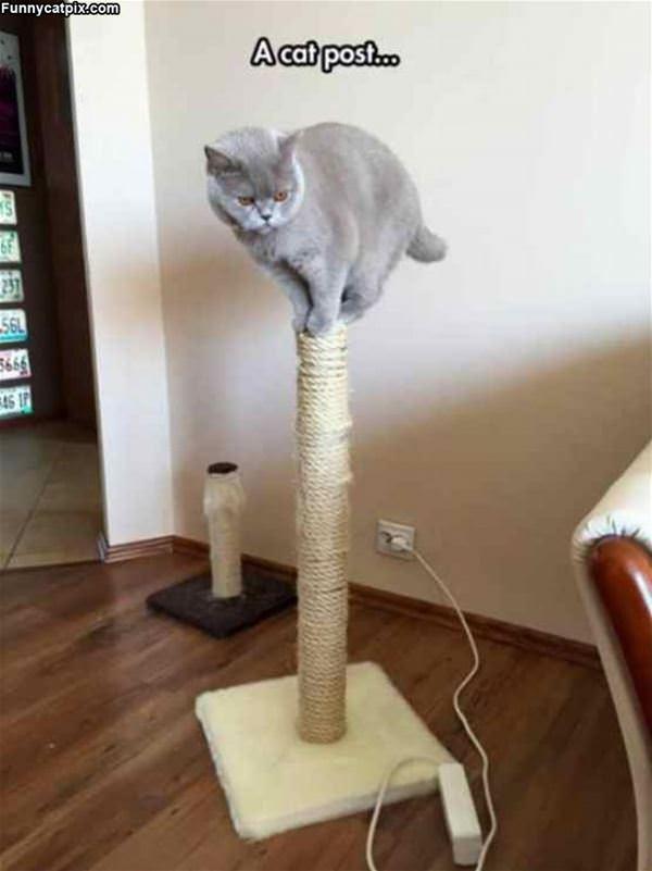 A Cat Post