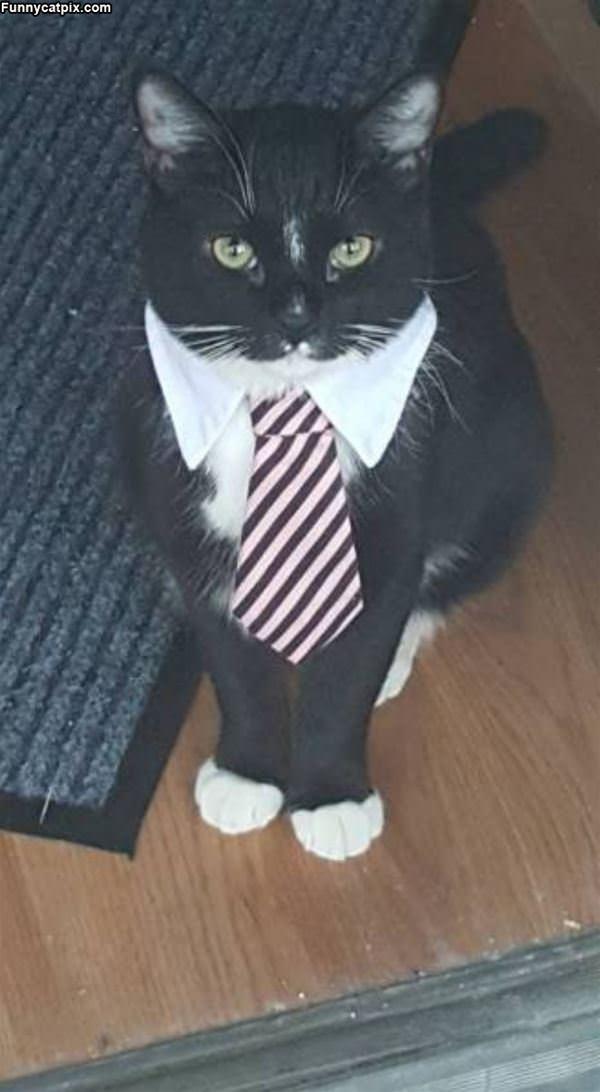 A Fancy Cat
