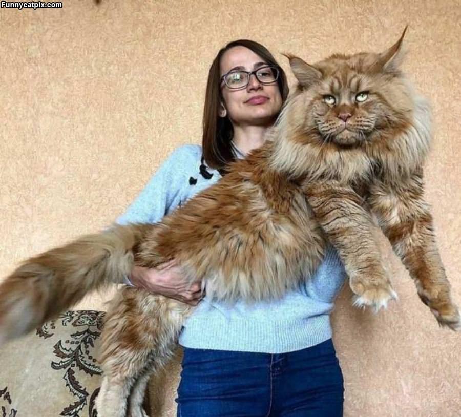 A Fluffff Of Cat
