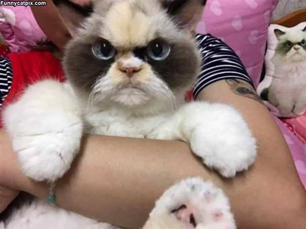 A Fuzzy Kitty