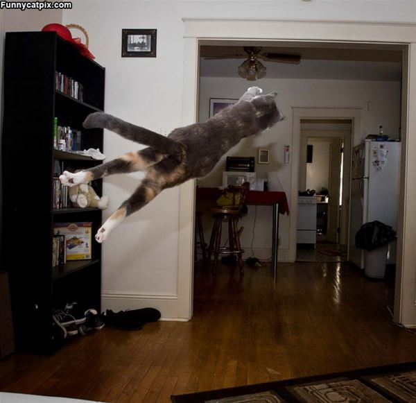 A Jumping Dive