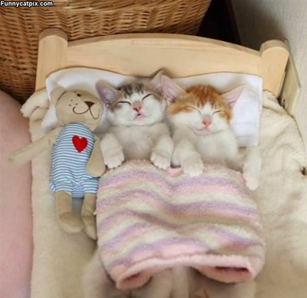 A Kitty Sleep Over