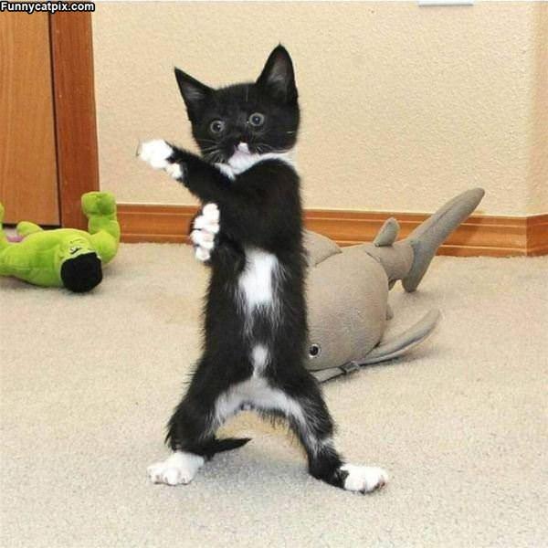 A Little Ninja Kitty