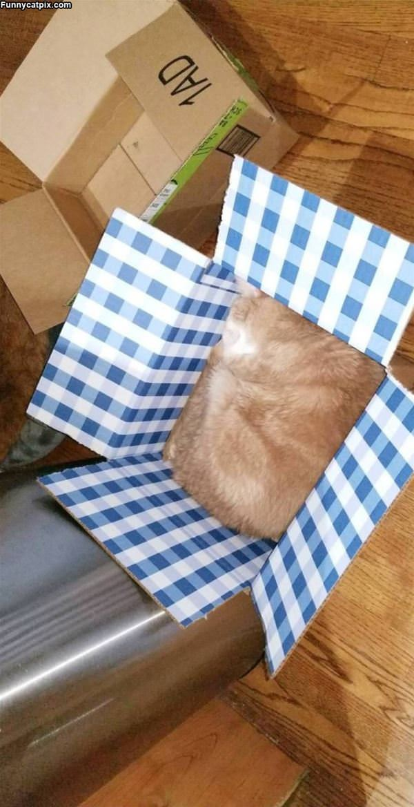 A Melted Square Cat