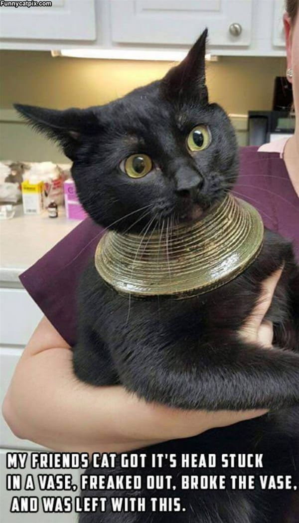 A New Necklace