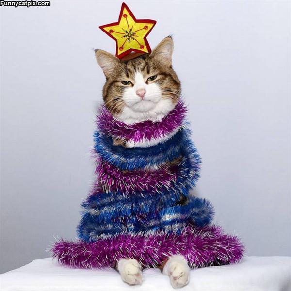 A Sad Christmas Tree
