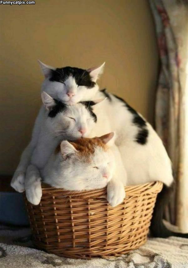 A Stack Of Cats