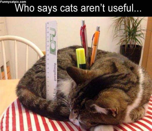 A Very Useful Cat