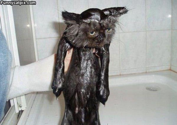A Wet Kitty
