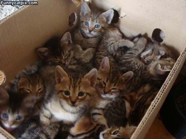 A Whole Box Of Kittens