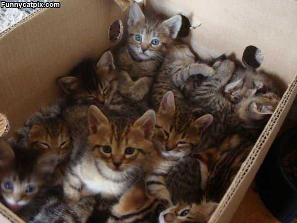 一箱小猫咪 - 雪山 - .