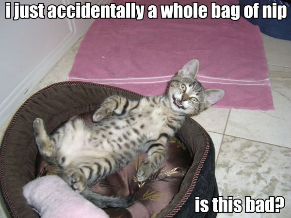http://www.funnycatpix.com/_pics/Accidentally.jpg