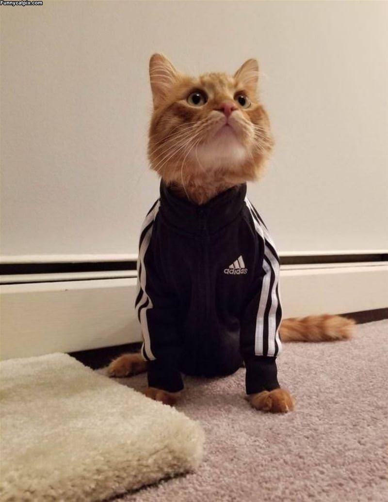 Adidas Cat