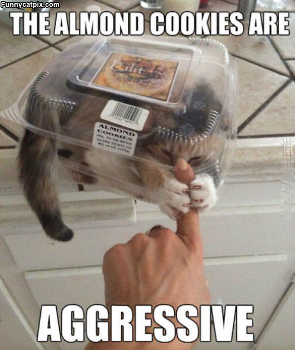 Aggressive Cookies