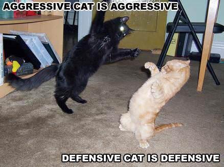 Aggresive vs Defensive Cat