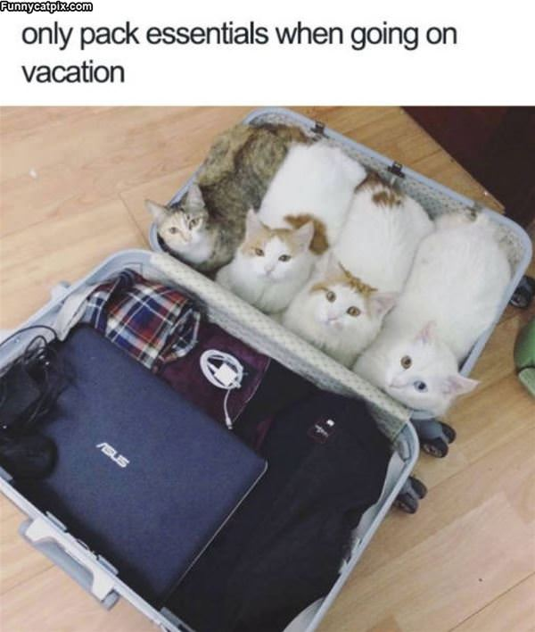 Always Pack Essentials
