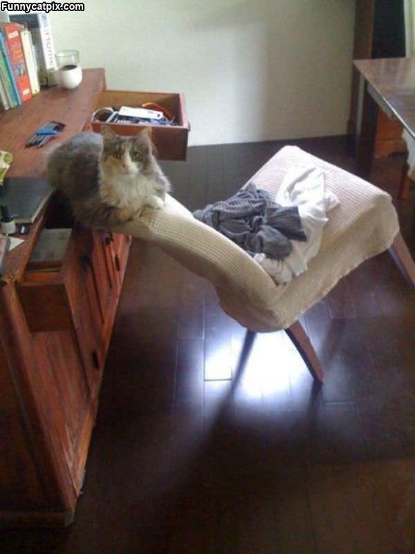 Amazing Balance Cat