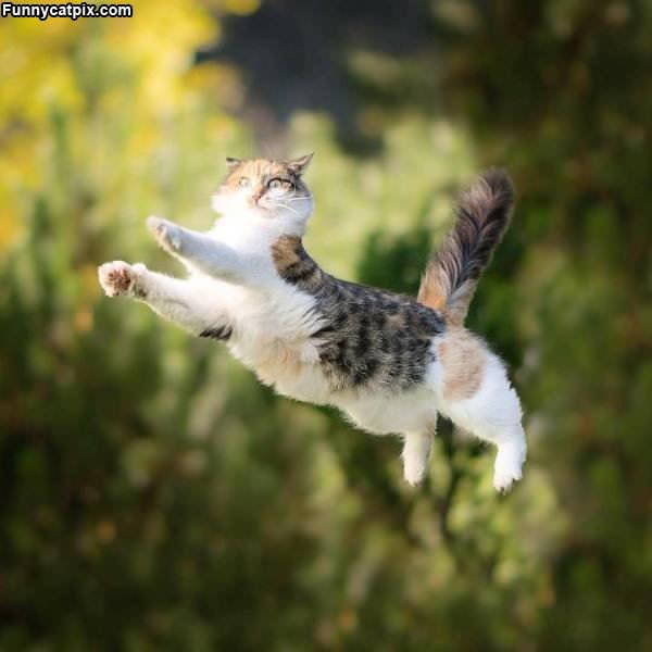 Amazing Majestic Kitty Jump