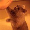 funny cat 4