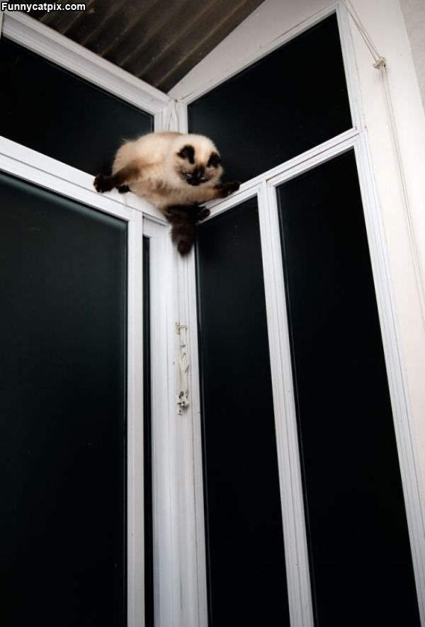 Anti Gravity Cat