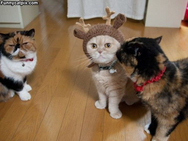 Antlers Cat