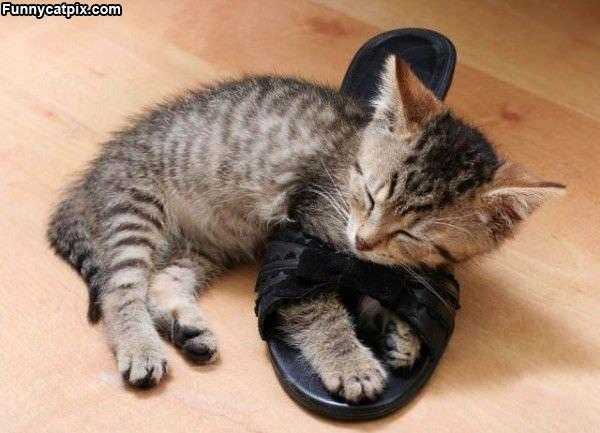 Asleep In A Shoe