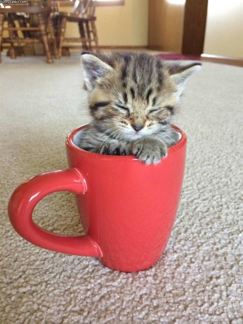 Asleep In My Cup