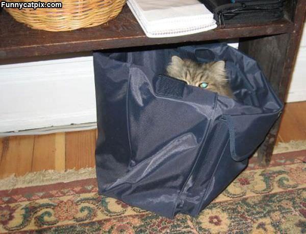 Asleep In The Bag