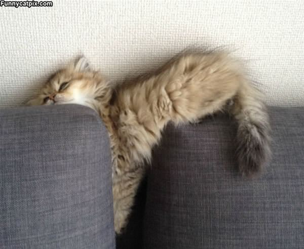 Asleep In The Couch