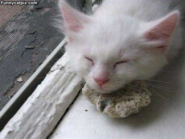 Asleep On A Rock