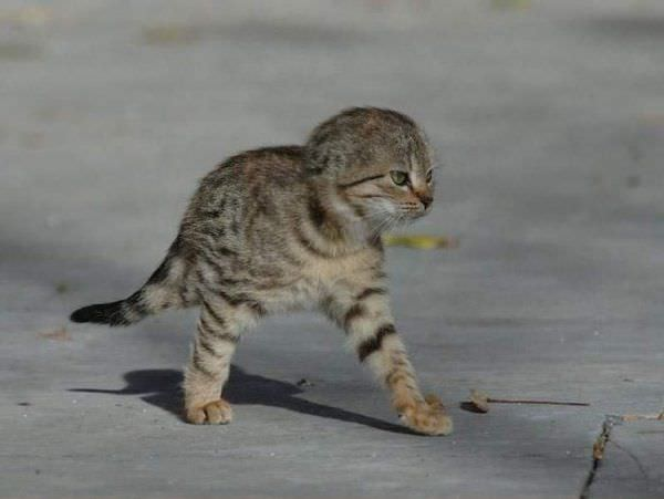 Attack Kitten Is Ready