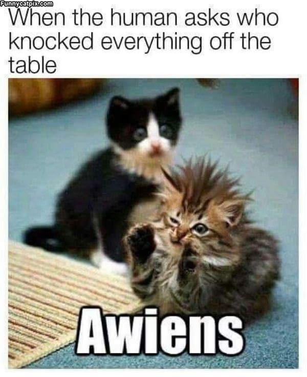 Awiens