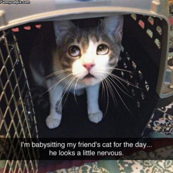 Babysitting The Cat