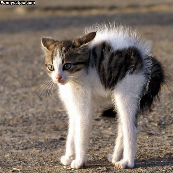 Back Off From The Kitten