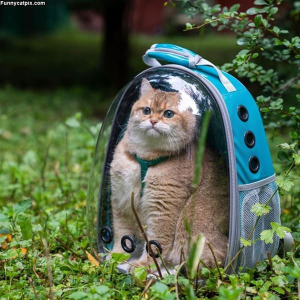 Backpack Full Of Cat
