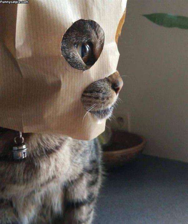 Bag On My Head