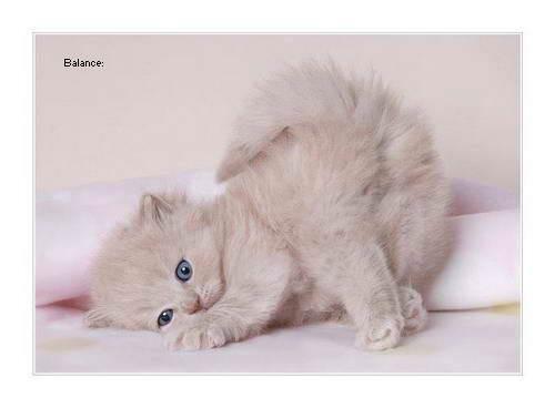 Balance Kitten