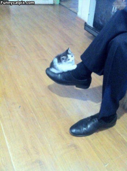 Balancing A Kitty